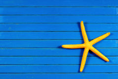 Sea star. Stock Images