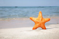 Sea Starfish On Sand Stock Images