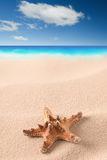 Sea starfish on sandy beach royalty free stock photo
