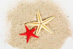 Sea stars Stock Images