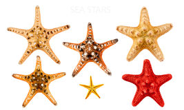 Sea stars. Big set of sea stars, isolated on white Royalty Free Stock Photos