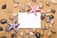 Sea stars Royalty Free Stock Photography