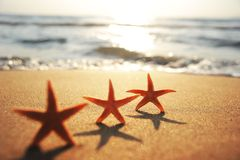 Sea stars at the beach at sunset Stock Images