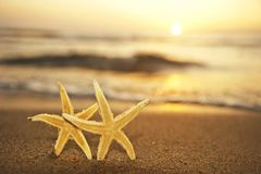 Sea stars at the beach at sunset Stock Image