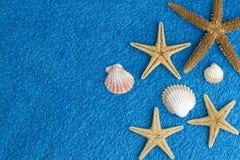 Sea stars Stock Photos