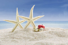 Sea stars and christmas bells on beach Royalty Free Stock Images
