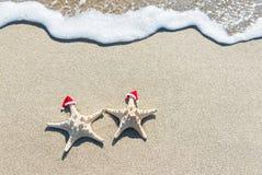 Sea-stars couple in Christmas santa hats sunbathing at tropical stock photo