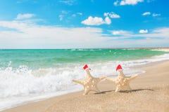 Sea-stars couple in santa hats walking at sea beach. Stock Photo