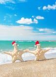 Sea-stars couple in santa hats walking at sea sandy beach. Royalty Free Stock Images