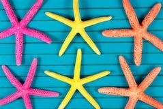 Sea stars. Stock Photo