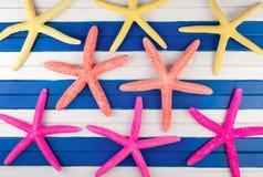 Sea stars. Royalty Free Stock Photos