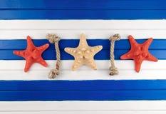 Sea stars. Stock Photos