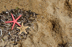 Sea stars, grass and shells Stock Photo