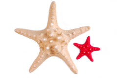 Sea stars isolated Royalty Free Stock Images