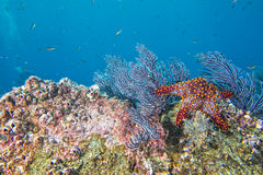 Sea stars in a reef colorful underwater landscape Stock Image