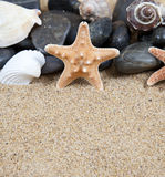 Sea stars rocks and shells. Sea stars, rocks and shells on sandy beach with copy space in foreground Royalty Free Stock Photos