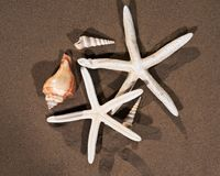 Sea Stars and Sea Shells on wet sand on the beach royalty free stock image