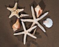 Sea Stars and Sea Shells on wet sand on the beach stock photo
