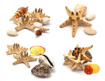Sea stars set. Royalty Free Stock Photography