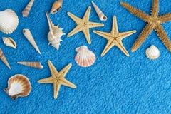 Sea stars Stock Photo