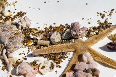Sea stars and sea shells on sand isolated on white background, selective focus. Sea stars and sea shells on sand isolated on white background, travel conception royalty free stock photography