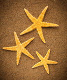 Sea stars or starfishes Royalty Free Stock Photography