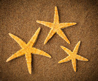 Sea stars or starfishes on the beach Stock Photo