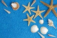 Sea stars Royalty Free Stock Image