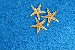 Sea stars Stock Photography