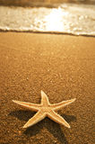 Sea stars Stock Photo