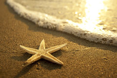 Sea stars Stock Photography