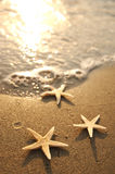 Sea stars Royalty Free Stock Images