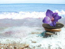 Sea still life. With flower and stacked pebbles Stock Image