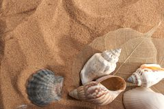 Sea still-life Royalty Free Stock Photography