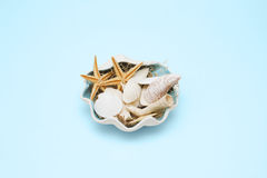 Sea still-life arrangement. Royalty Free Stock Photography