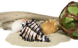 Sea still life with shell Stock Photo