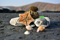 Sea still life from seashells, sea star, pebbles and sea urchins stock images