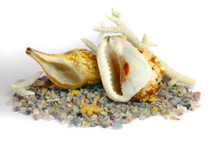 Sea stillife Royalty Free Stock Photo