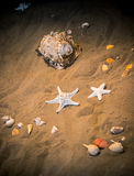 Sea still-life Royalty Free Stock Images