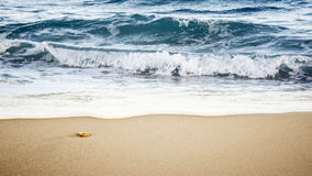 Sea stone. Black Sea summer stone beach Royalty Free Stock Photos