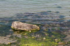 Sea stone and seaweed Royalty Free Stock Photography