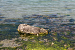 Sea stone and seaweed Royalty Free Stock Images