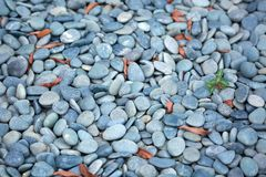 Sea Stone with selective focus and shallow depth of field Royalty Free Stock Photos