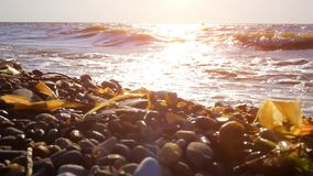 Sea and stone during storm. Bright sunset. Beautiful seascape. Composition of nature stock video footage