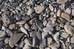 Sea stones on the beach. Evenly scattered along the beach for texture Stock Photos