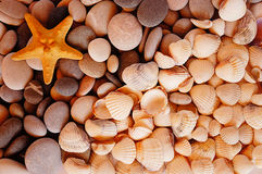 Sea stones, cockleshells and starfish Stock Images