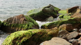 Sea stones covered with algae stock video