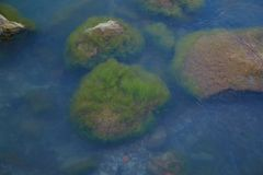 Sea stones in the Baltic Sea. Sea stones covered with green algae in blue sea water on the shore of the Baltic Sea Stock Images