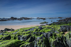 Sea stones covered with green algae. Royalty Free Stock Photography