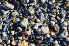 Sea stones and shells Royalty Free Stock Photo